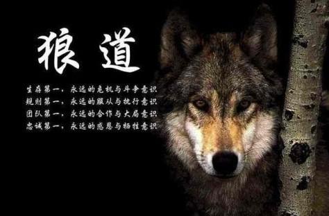 同进同退狼虽然通常独自活动,但狼却是最团结的动物,你不会发现
